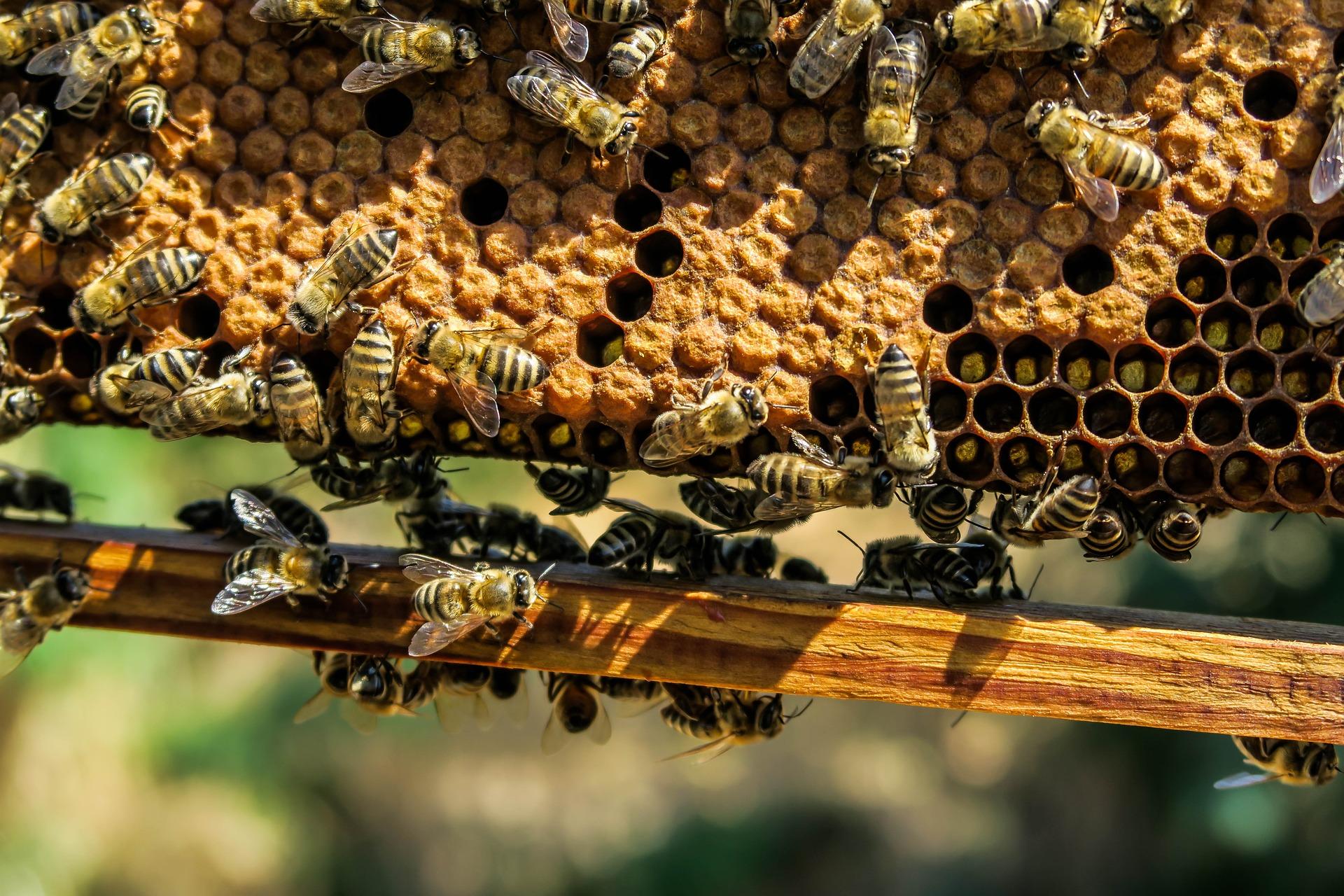 Mehiläiskenno. Pixabay.