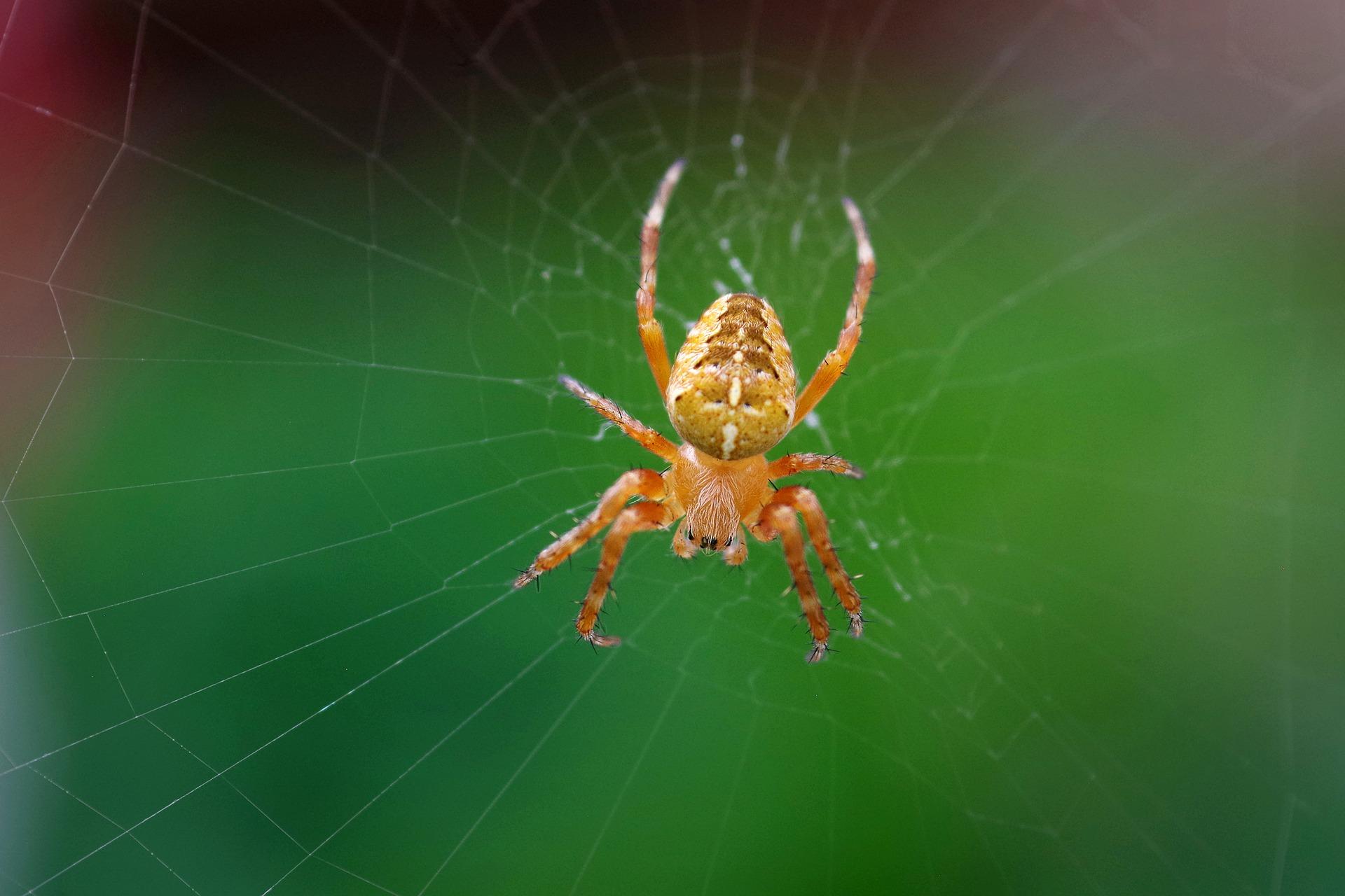 Hämähäkki. Pixabay.