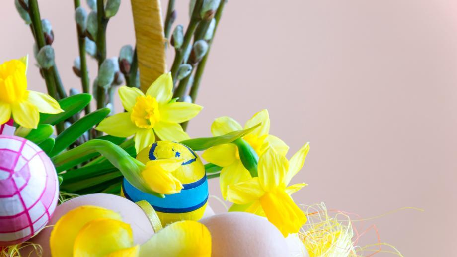 Narsisseja, pajunkissoja ja pääsiäismunia. Pexels.