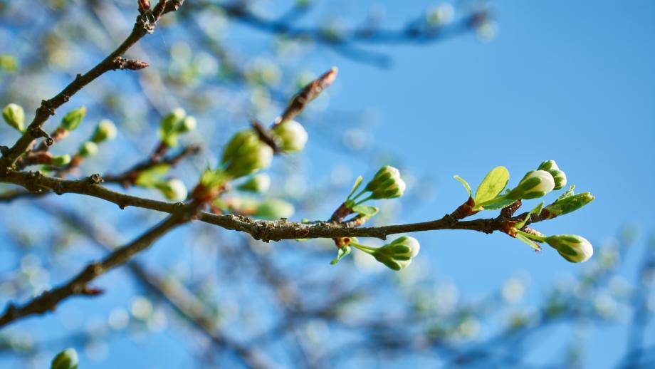 Oksat keväällä. Pixabay.